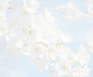aesthetic, blossom, and flower image