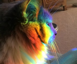 cat, colors, and rainbow image