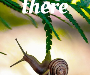 easel, green, and snail image
