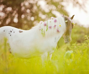 horse, nature, and cute image