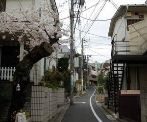japan, cherry blossom, and sakura image