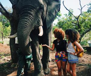 Afrika and elephant image