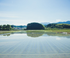 field, food, and japan image