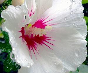 belleza, naturaleza, and primavera image