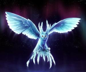 art and owl image