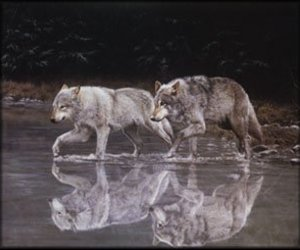 river and wolves image