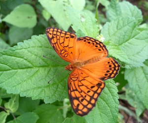 animal, black, and butterfly image