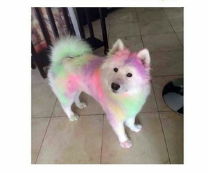 cute, dog, and color run image