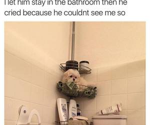 lol, dog, and cute image