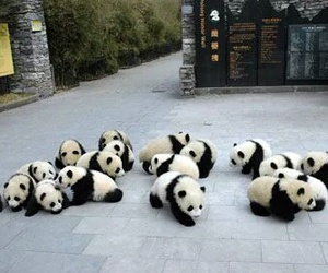 panda, animal, and cute image