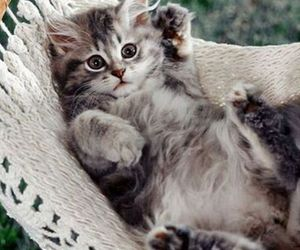 animal, animals, and love cat image