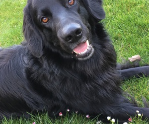 black, dog, and dogs image