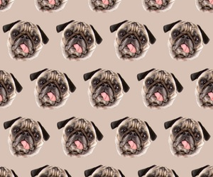 wallpaper, dog, and background image
