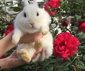 rabbit, flowers, and animal image