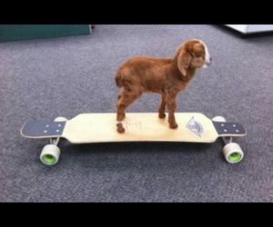 brown, green, and goat image