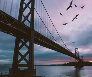 birds, bridge, and night image