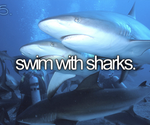 shark and before i die image