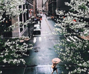 city, flowers, and travel image