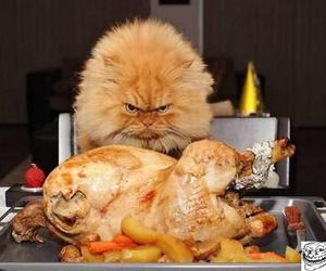 cat, dinner, and Chicken image