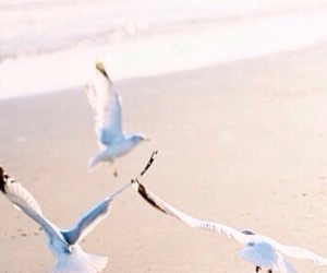 background, beach, and birds image