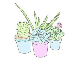 overlay, plants, and cactus image