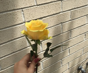 aesthetic, flower, and rose image