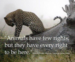 animal and rights image