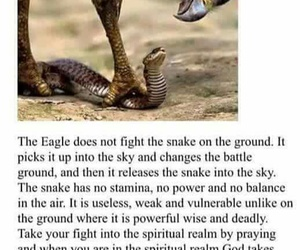 comfort zone, snake, and eagle image