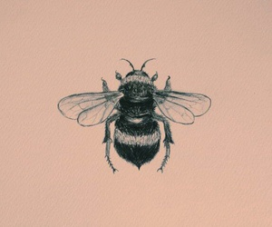 bee, art, and drawing image