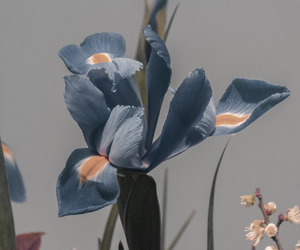 flowers, blue, and theme image