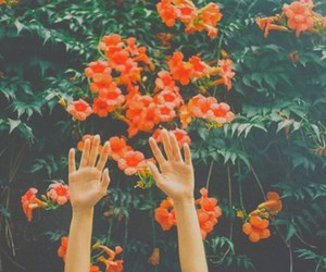flowers, orange, and hands image