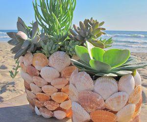 beach, diy, and shell image