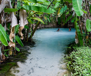 tropical, water, and summer image