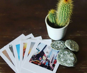 cactus, france, and graphisme image