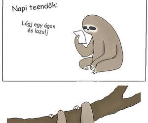 animal, sloth, and magyar image