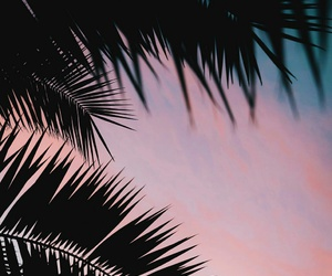 c1, sumset, and palmtrees image