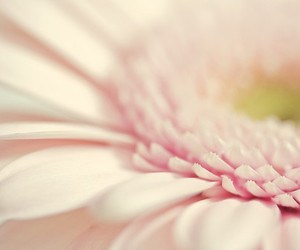 pastel and flower image