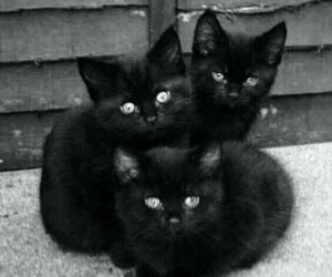 cat, kitty, and black image
