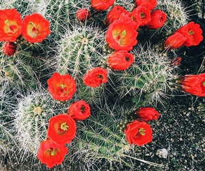 cactus, flowers, and desert image