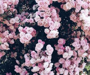 flowers, cute, and wallaper image