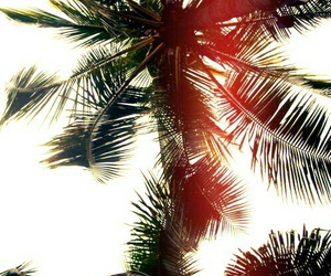 beach, holidays, and palms image