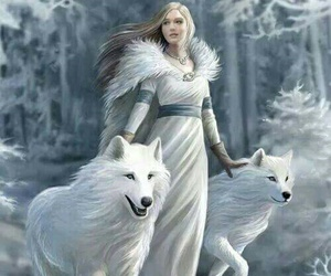 wolf, snow, and white image