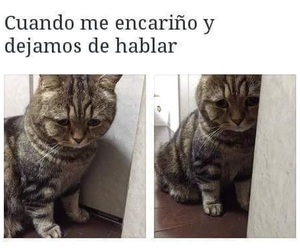 cat, animal, and frases image