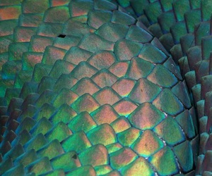 snake, scale, and green image