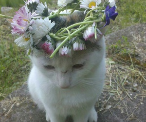 cat, crown of flowers, and flowers image