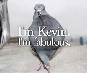 kevin, fabulous, and one direction image