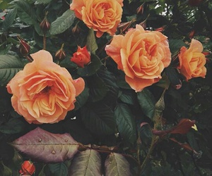 green, orange, and roses image