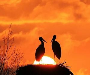 birds, orange, and sky image