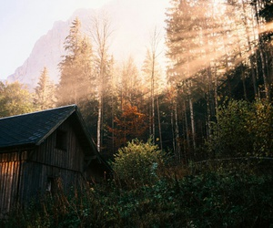 forest, house, and morning image