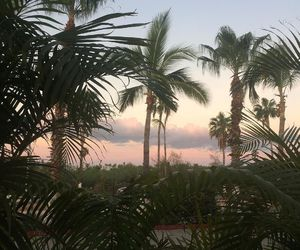 palm trees, sunset, and tropical image